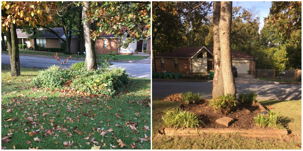 Before & after of front yard landscaping clean up